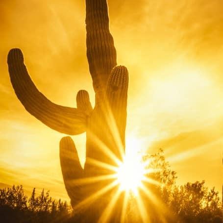 E-liquide Saveur cactus